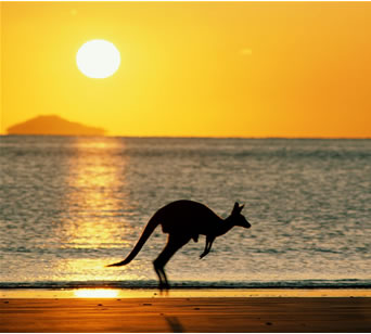 australia_kangaroo[1]
